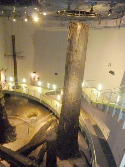 埋没林・巨木