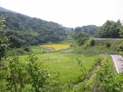 三隅町室谷の棚田